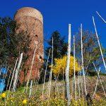 La torre di Montaldo Roero