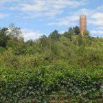 Panorama dalle vigne - Montaldo Roero
