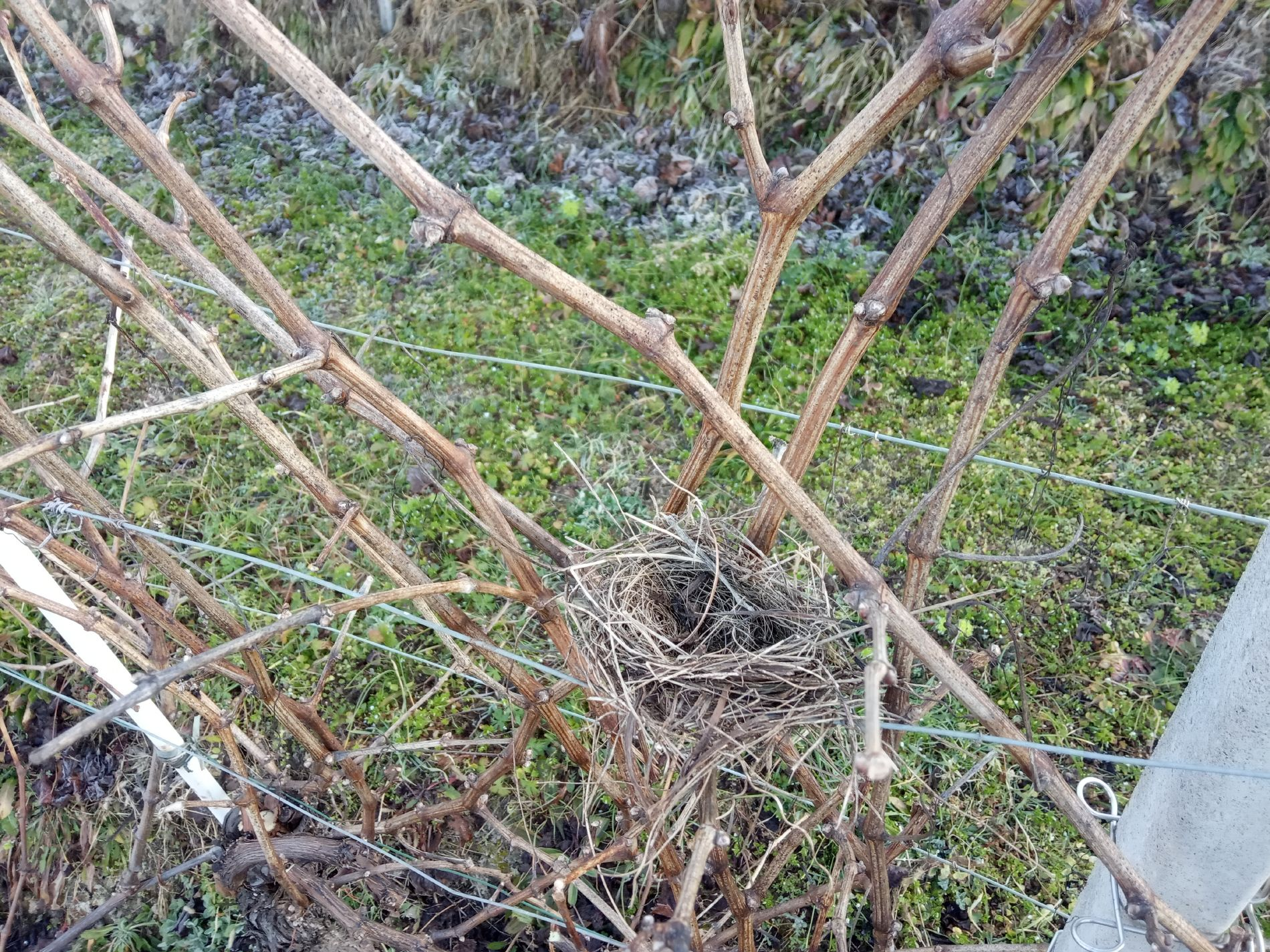Barovero nido vigna