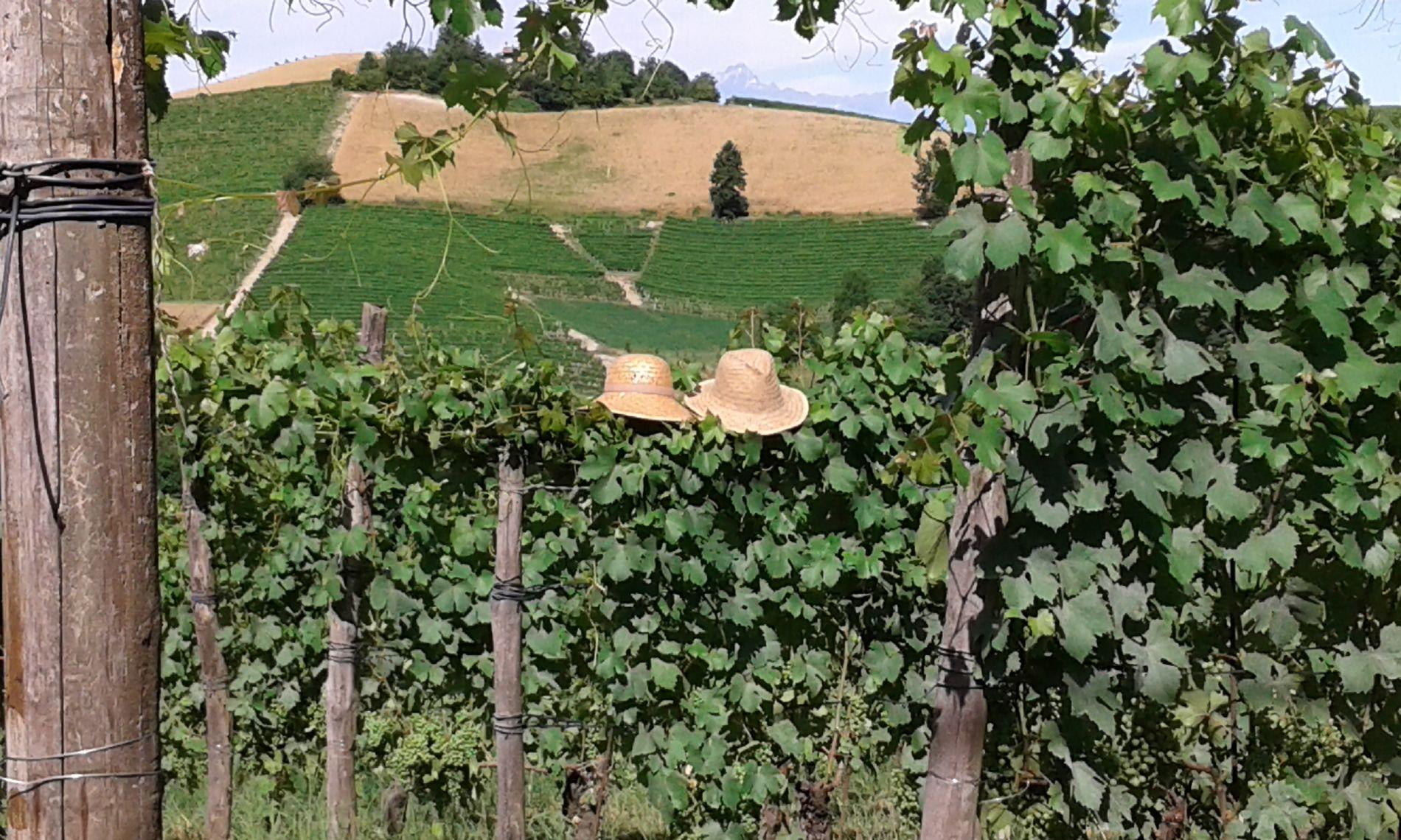 Barovero vigne cappelli