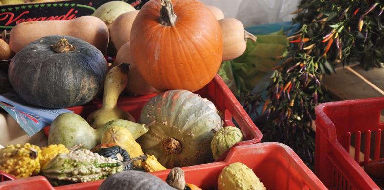 bra_pumpkin_market