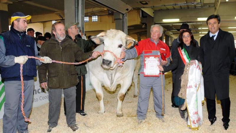 Grande Rassegna di bovini piemontesi