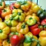 Peperoni Carmagnola Tumaticot