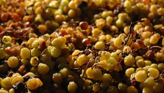 """Ultimo Grappolo'' vino bianco ottenuto da uve passite – Az. Agricola Ghiga"
