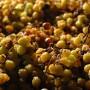 uva-passita-di-mosc.-giallo (1)