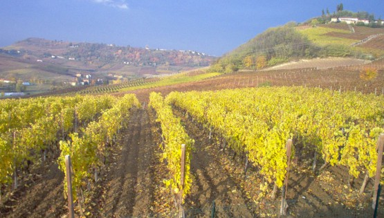 L'Azienda Cocito Dario raccontata attraverso il nuovo sito web