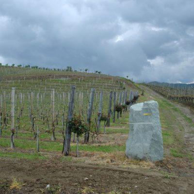 Cascina Reale - vigne