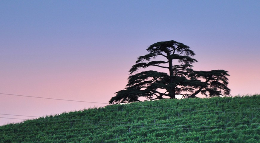 The Cedar in La Morra on the Monfalletto hill