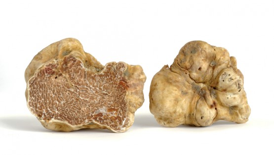 The white truffle of Alba