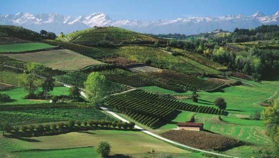 Nelle terre del Moscato d'Asti