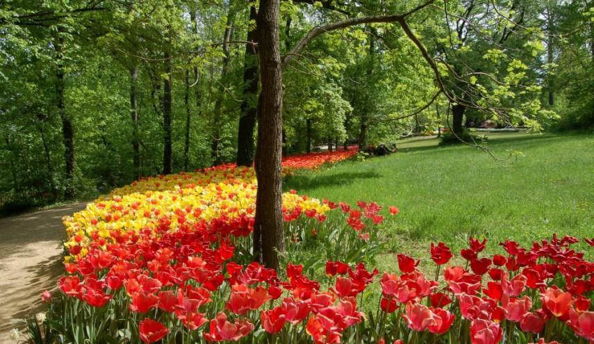 Messer tulipano sagre fiere in langa e roero for Fiere piemonte oggi