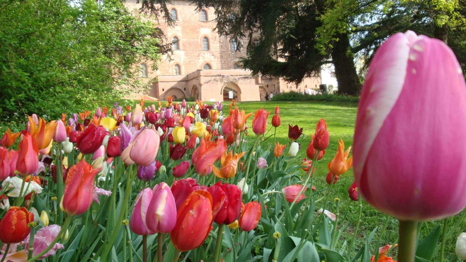 Messer Tulipano - Eventi