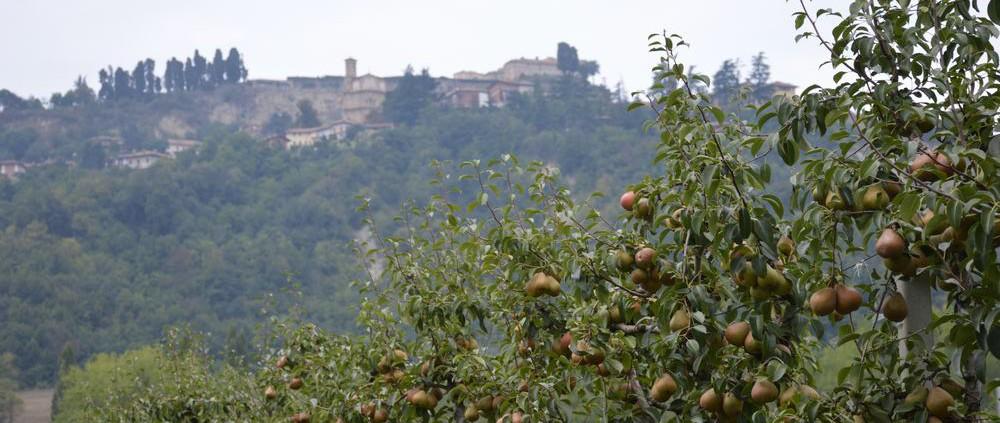 L'Orto Smeraldo - il frutteto