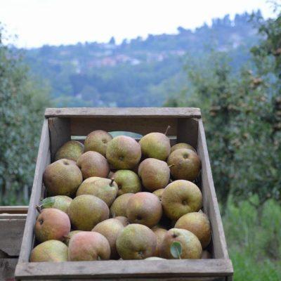 L'Orto Smeraldo - Madernassa Pears