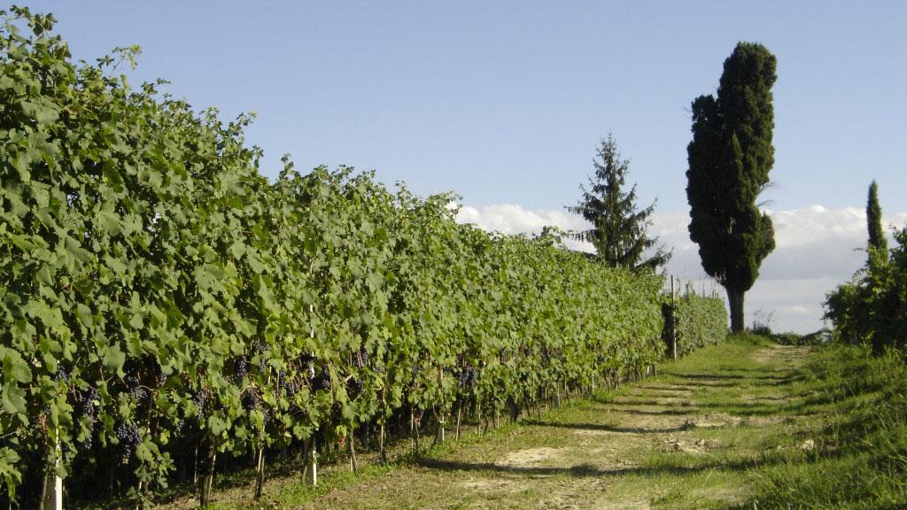 Vigna Colla - Battaglino