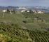 Cantine Coppo - le vigne di Moscato a Canelli
