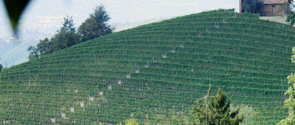 La Trava - Vigne