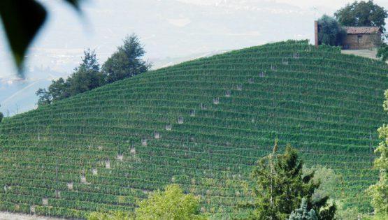 La Trava: Cantine Aperte per Vinum