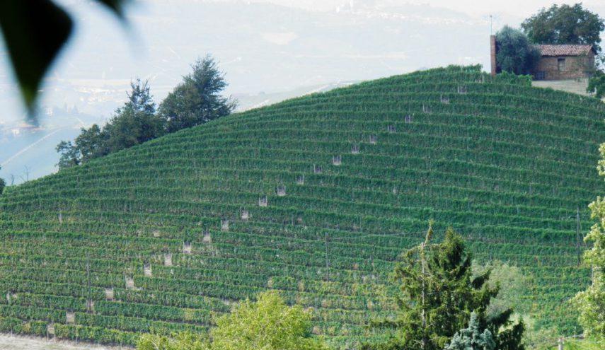 La Trava - Vineyards