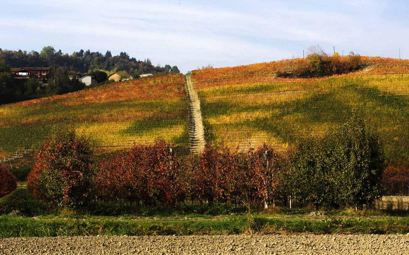 Borgogno Rivata - Collina d'autunno