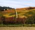 Langhero - Collina d'autunno