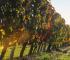 Langhero - Filari d'autunno