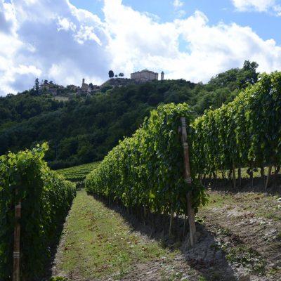 Borgogno Rivata - Vigne