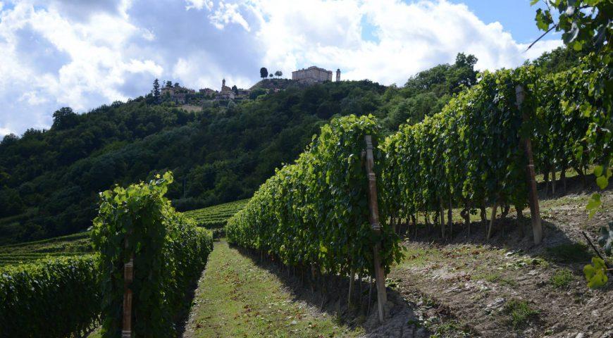 Langhero - Vigne