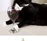 gatto - eventi