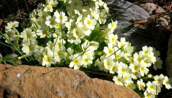 Escursione alla ricerca delle fioriture primaverili del Roero