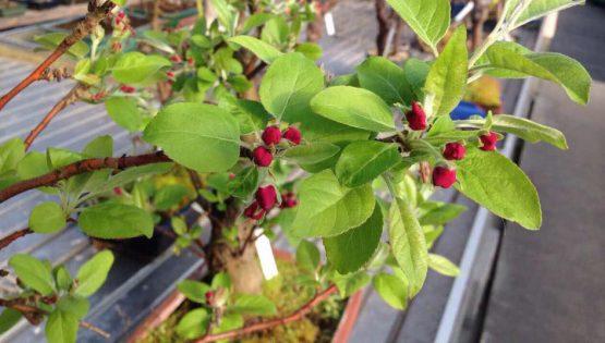 Corso di bonsai per principianti