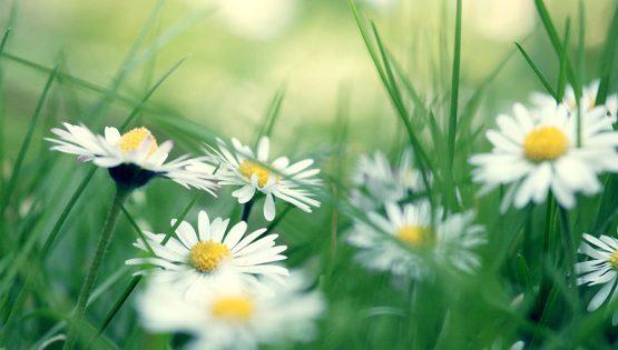 Quel mazzolin di fiori