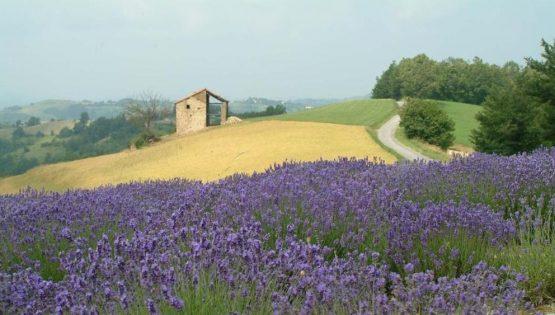 Non solo erbe…Cena profumata