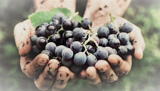 Cascina Fontanette: cantine aperte per Vinum
