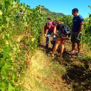 Cascina Fontanette - Harvest
