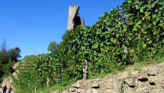 Il gran sentiero del Moscato e i luoghi di Cesare Pavese