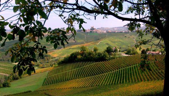 Escursione tra vigne e castelli: il gran sentiero del Barolo