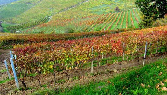 Da Neive a Barbaresco tra le vigne dei grandi vini