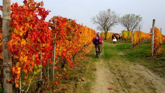 Le colline dei Sorì: panorami e calice di vino