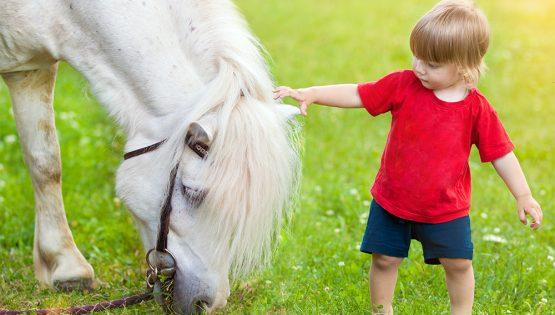 A cavallo con Babbo Natale