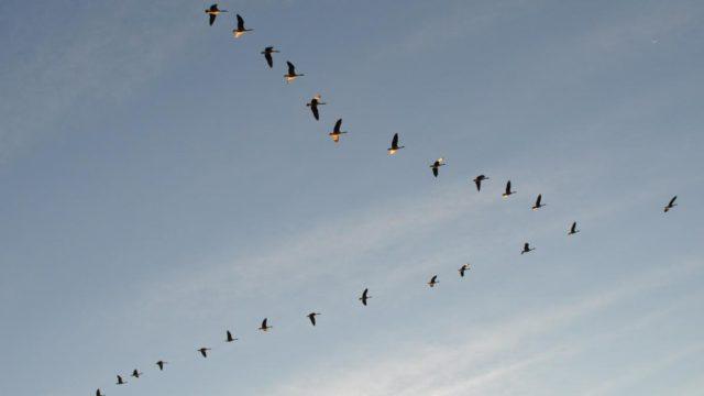 uccelli - eventi