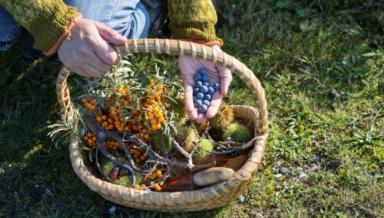 Foraging in Langa: wildplants from Grandma's kitchen