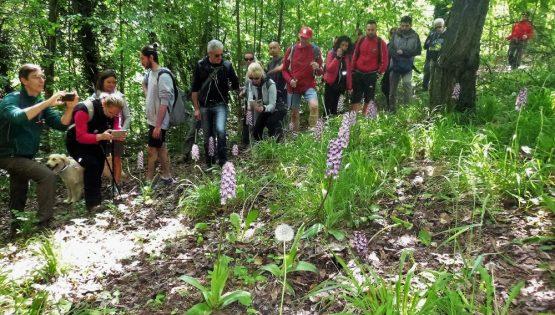 Sul sentiero del lupo e delle orchidee