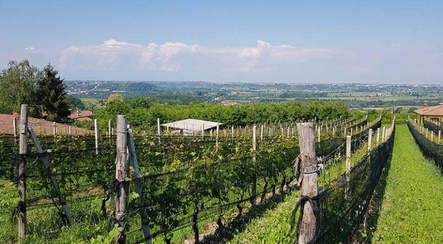 barolo vigne - eventi