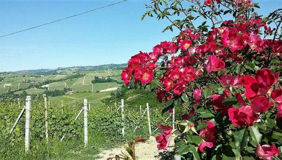 Passeggiata tra le vigne alla scoperta del Re dei vini