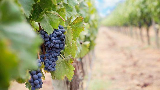 Movimento Turismo del Vino: Cantine Aperte da Francone
