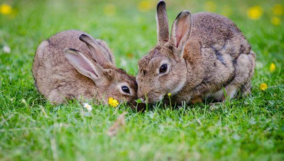 1° mostra del coniglio