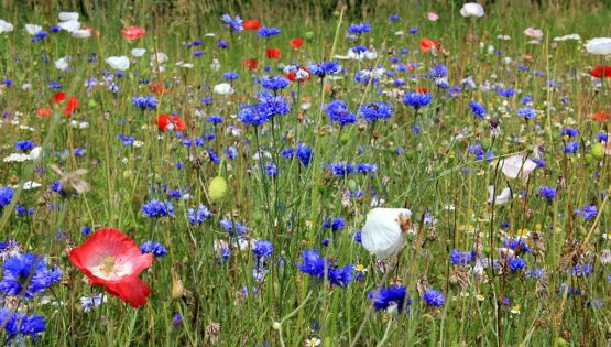 Alla Cascina della Monaca sul sentiero dei fiori
