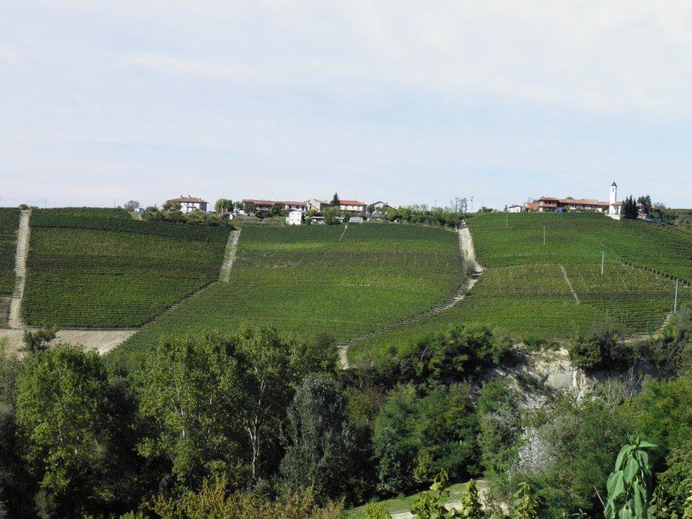 Le Strette Vini - Vigneto Pasinotti di Nas-cetta