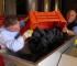 Le Strette Vini - Controllo delle uve dopo la vendemmia prima della pigiatura